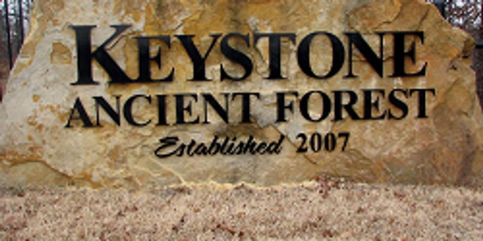 OKLAHOMA - Keystone Ancient Forest
