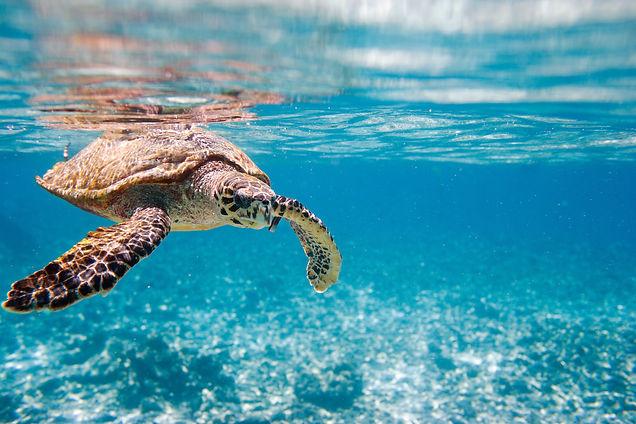 Sea Turtle in Seychelles (1).jpg