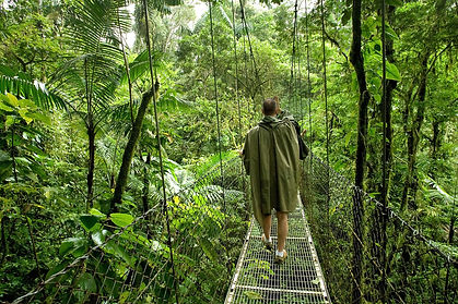 Canopy bridge.jpg