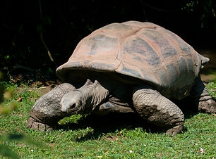 Land Turtle.jpg