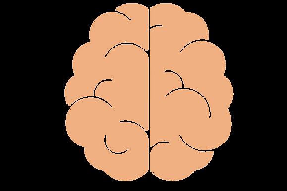 Flow the Brain2