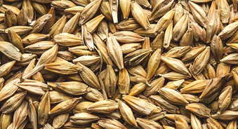 766x415_THUMBNAIL_Is_Barley_Gluten-Free.