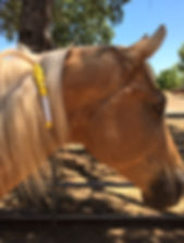 equine id highly visible ManeStay