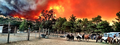 horse id tags wildfire emergency hurricane natural disaster
