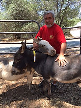 Donkey emergency ID ManeStay