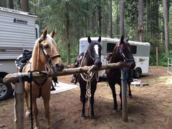 Horse camping!