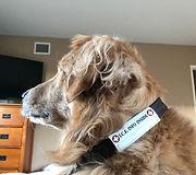 dog identification waterproof readable