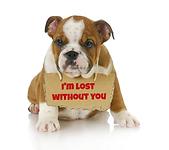 Dog collar identification I.C.E. Collar ID