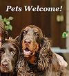 Dog link icon.jpg