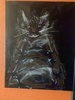 Sebastian cat