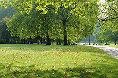 green space.jpg