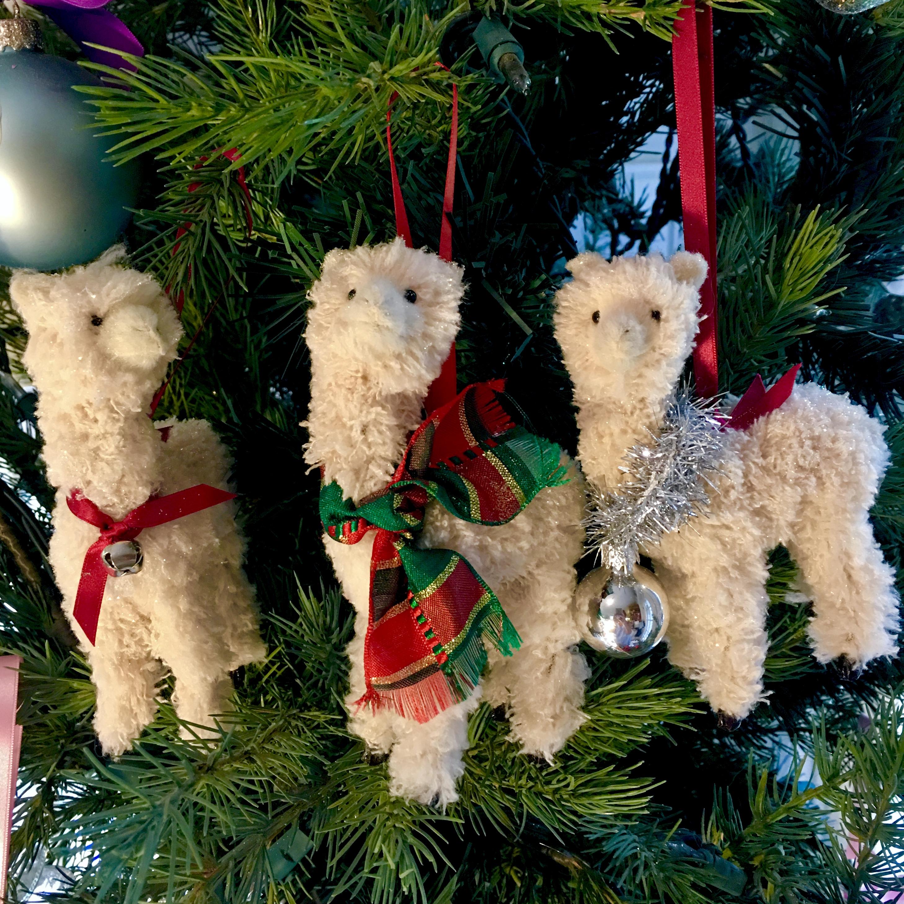 A trio of llamas