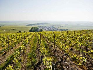 Per fiets langs het terroir van Champagne en Chablis.