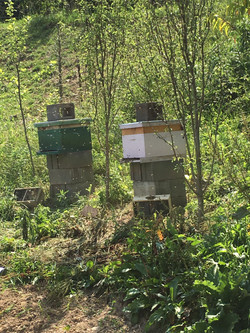 Bees 3