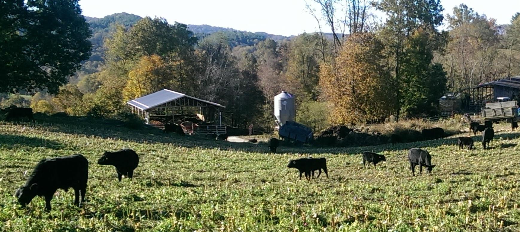 BRG Farm 2
