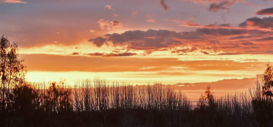 horses sunset.jpg