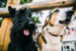 animals-blur-canine-800406.jpg
