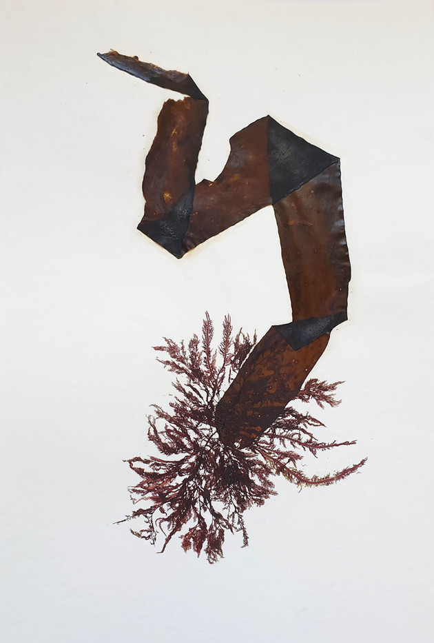 from 'Organic and Synthetic: Pressings', 2019 - 2020