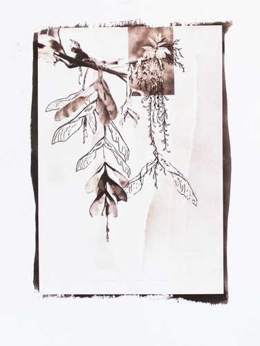 from 'Acer Nefundo' series, 2013