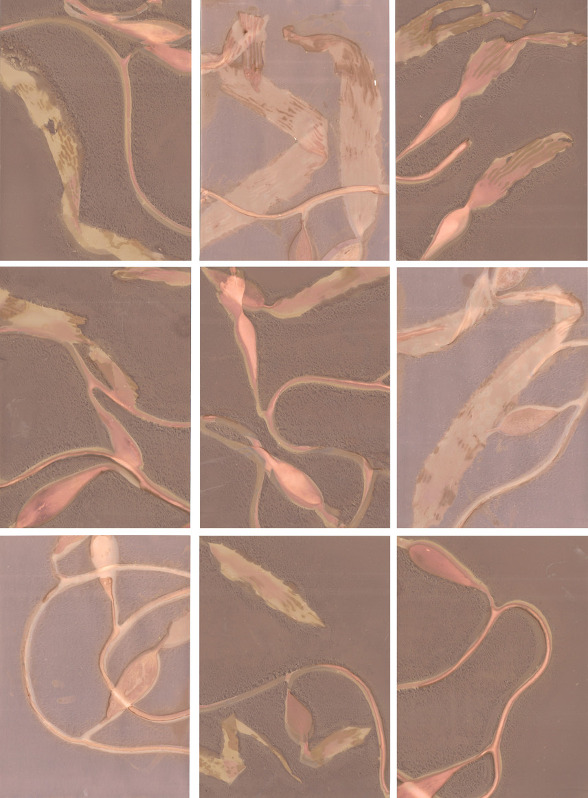 'Bladder Kelp: Illuminated',2019 - 2020