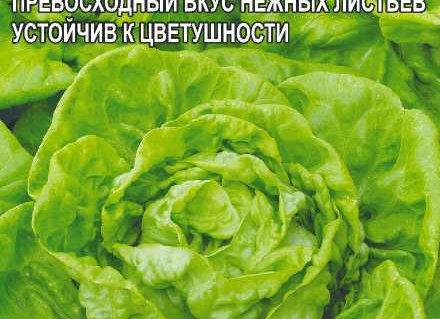 Зелень Салат Аттракцион/Сем Алт