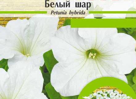 Петуния Белый Шар/Сем Алт