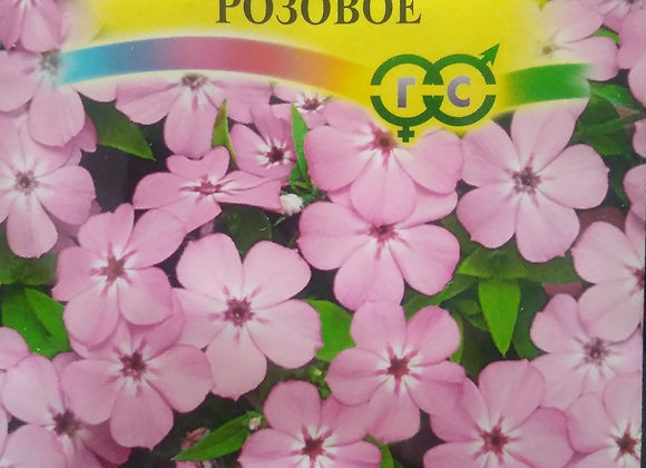 Флокс очарование розовое