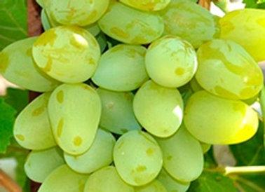Виноград Супер-экстра (Цитрин)