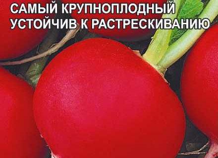 Редис Дуро Краснодарское/Сем Алт
