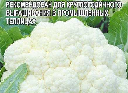 Капуста Цветная Марвел 4 Сеазонс (4 Сезона)/Сем Алт/