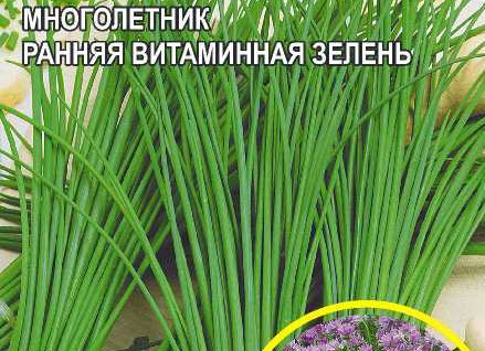 Лук Шнитт Медунок СА