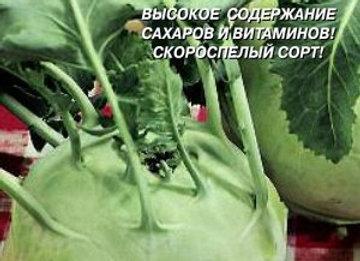 Капуста кольраби ВЕНСКАЯ БЕЛАЯ 1350