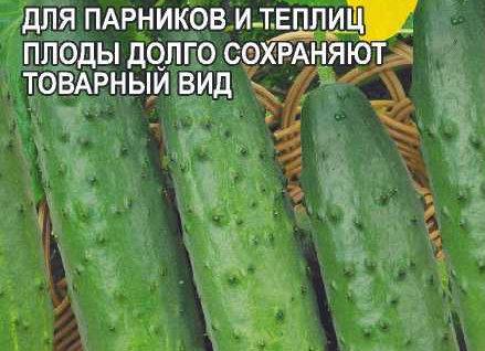 Огурец Зозуля F1 (ТСХА 77)/Сем Алт