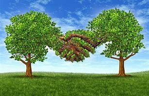 Treesshakinghands.jpg