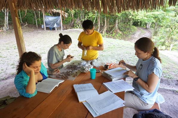 Verificando las identificaciones de huesos y organizando las formas de lote.