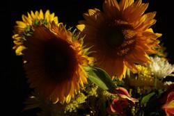 Sunflower Shade