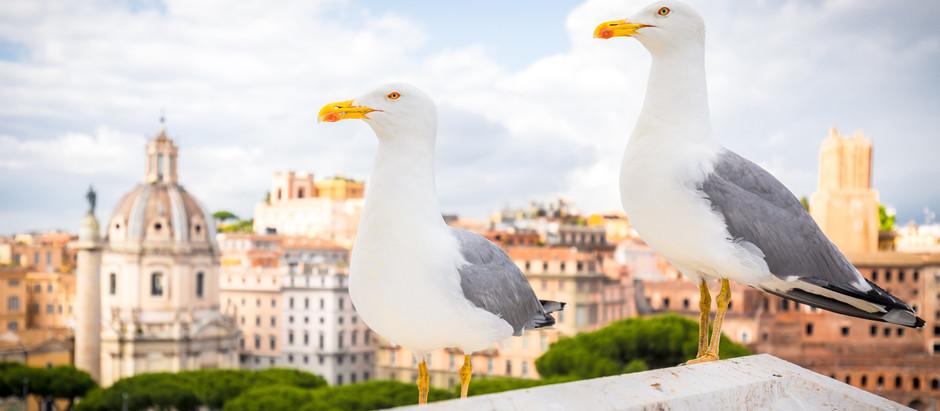 Revisit Rome: The Views
