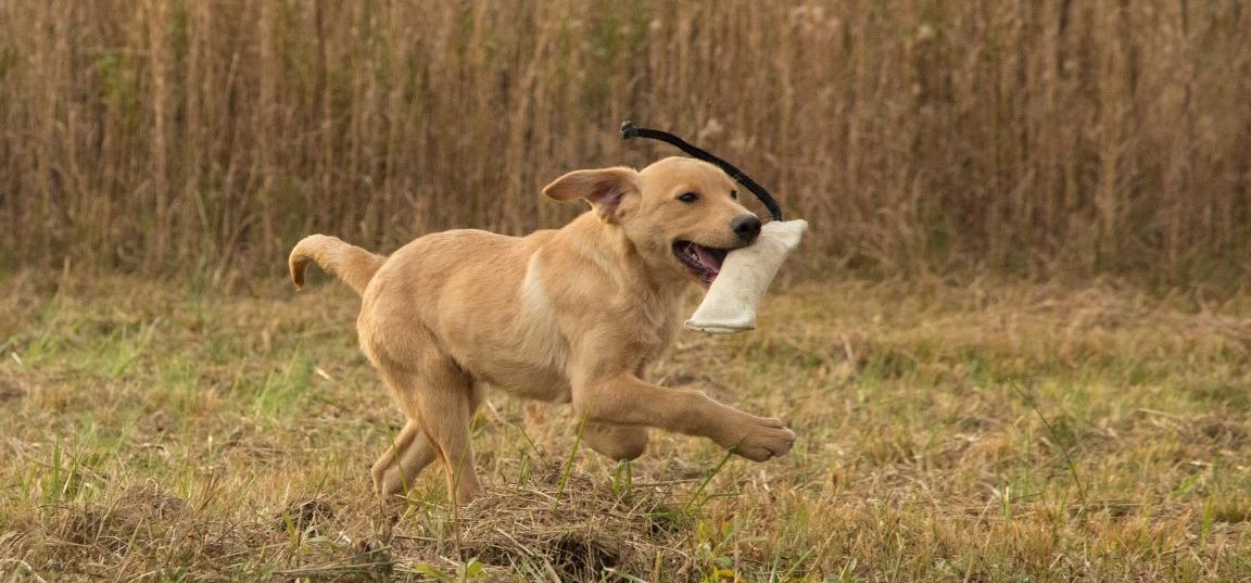 Mossy Oak Dog Kennels