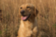 Red Mossy Oak Kennel Dogs For Sale Briti