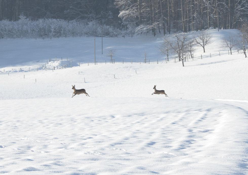 schnee am stephanstag 039.jpg
