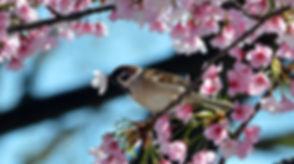 1425656653_equinozio-di-primavera-2.jpg