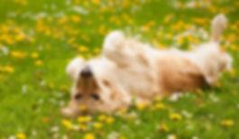 mascotas-primavera.jpg