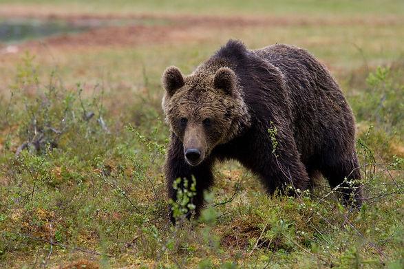 bear-1346492.jpg
