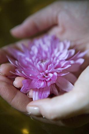 Blume in der Hand
