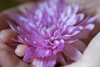 New Zealand yoga retreat, Australian yoga retreat, Rarotonga yoga retreat, mindfulness, womens retreat,