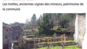 Midi Libre - Les treilles, anciennes vignes des mineurs, patrimoine de la commune