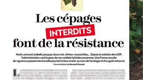 La Revue du Vin de France - The forbidden grape varieties are resisting