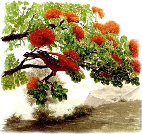 Volcano Red Bird