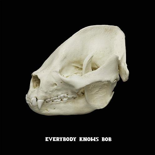 Reservation: Giant Panda Skull