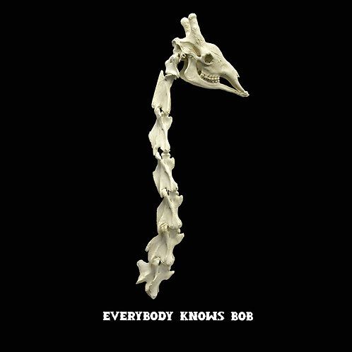 Reservation: Giraffe Skull